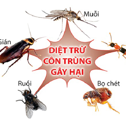 dich-vu-diet-con-trung-ve-sinh-cong-nghiep-5s