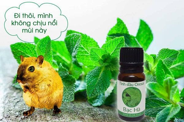 394 - Diệt chuột hiệu quả với tinh dầu bạc hà
