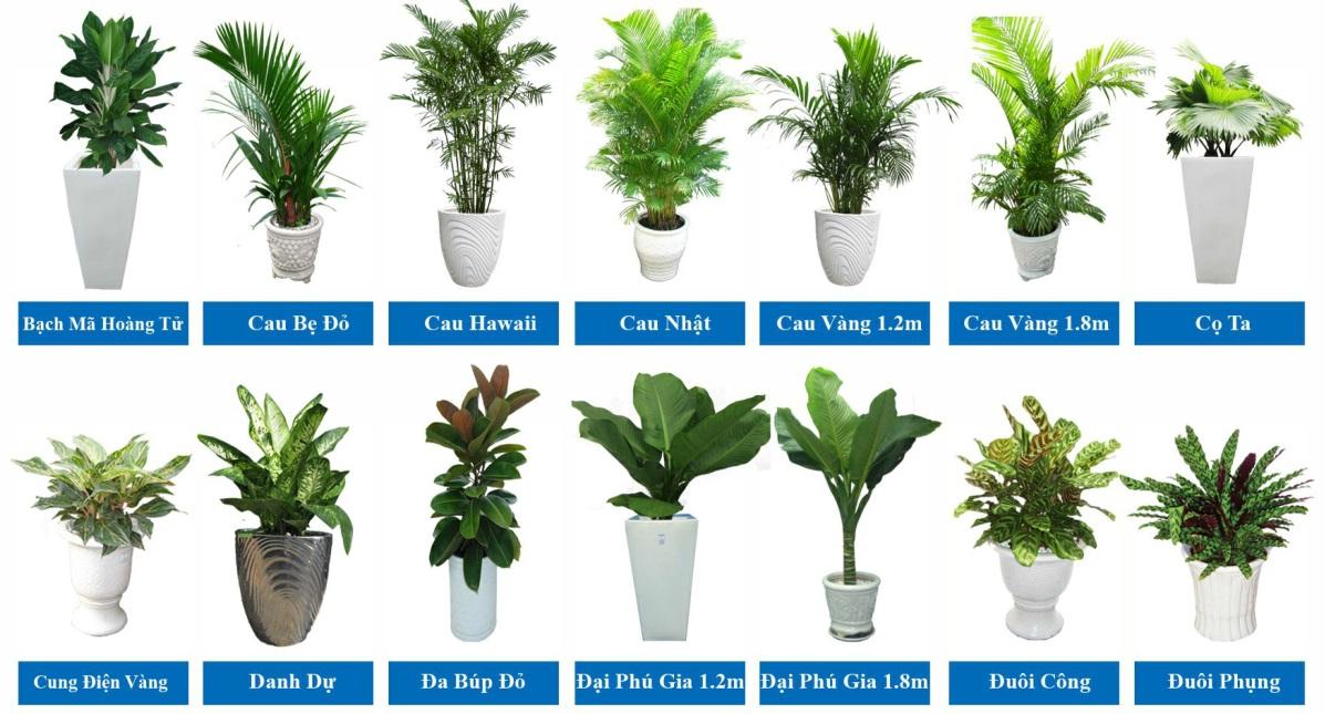 Cho thuê cây cảnh văn phòng với nhiều mẫu cây đa dạng