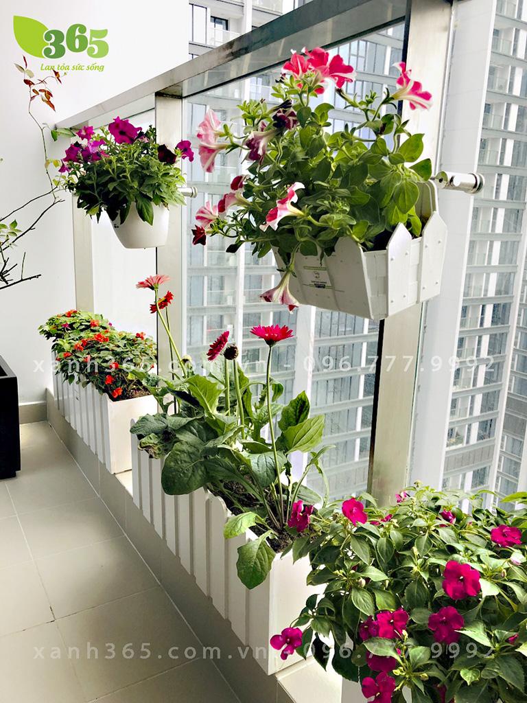 Ban công chung cư với nhiều sắc hoa rực rỡ