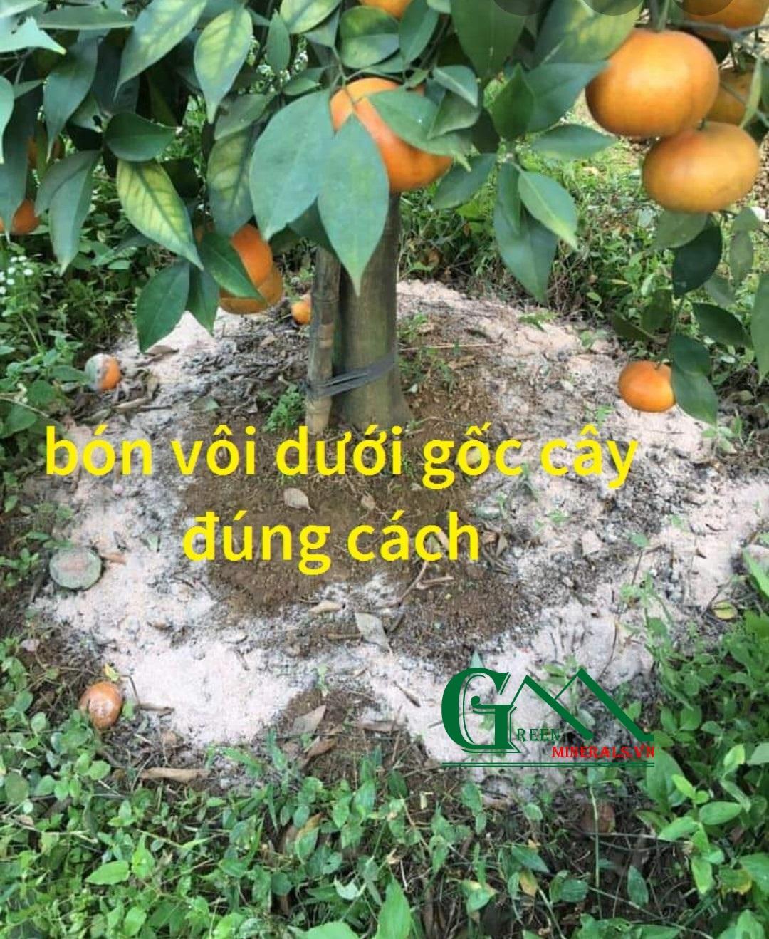 Bón vôi đúng cách - giải pháp canh tác bền vững cho cây ăn trái.