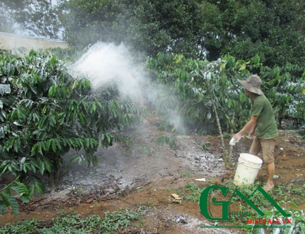 Trồng cây có múi: Chú ý bón vôi, xử lý ra hoa không dùng hóa chất