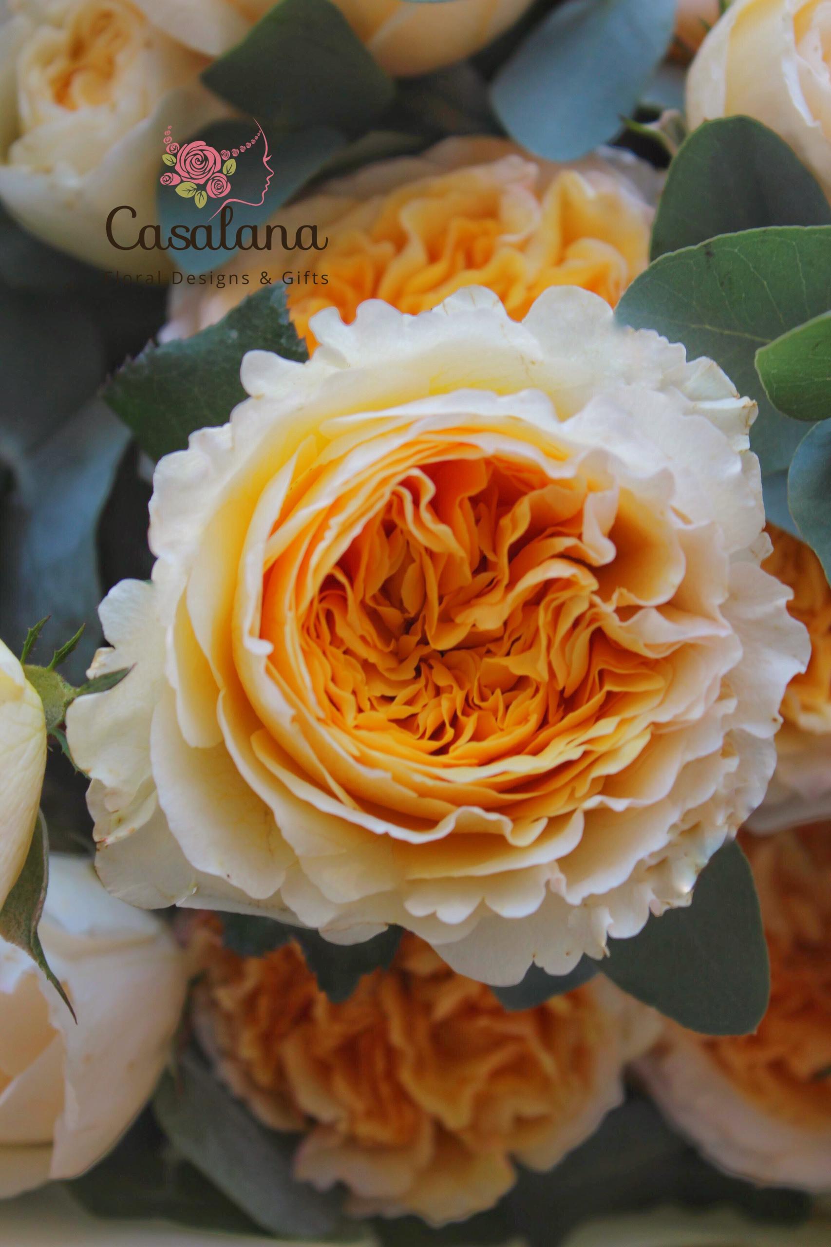 Bó hồng Beatrice A