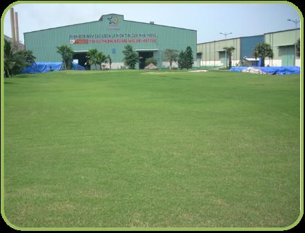Planting Grass