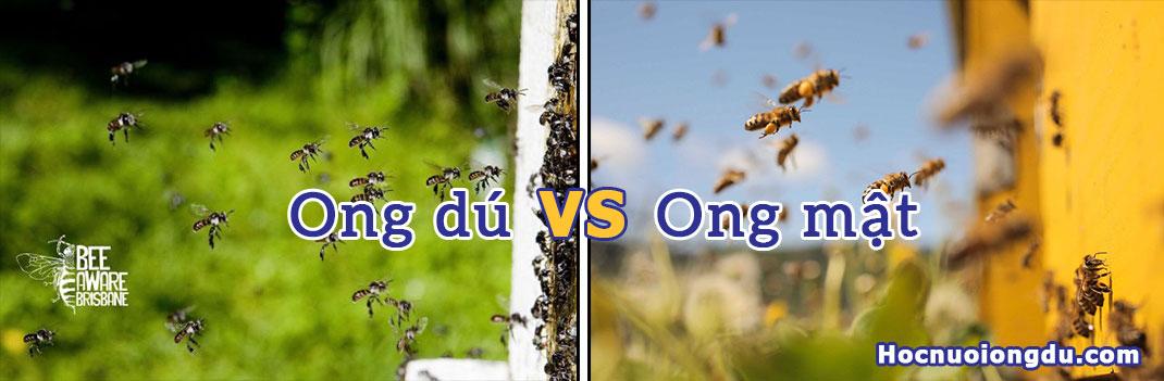 so sánh hiệu quả kinh tế giữa nghề nuôi ong mật và mô hình nuôi ong dú