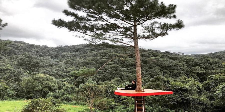 """Image result for """"Trái tim lơ lửng"""" giữa rừng Hoa Sơn Điền Trang"""