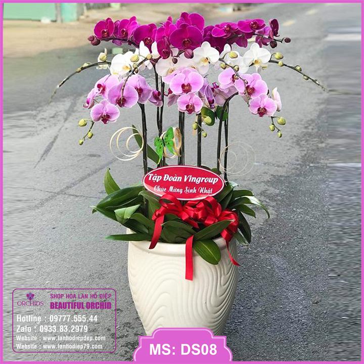Chậu hoa lan hồ điệp đa sắc 10 cành DS08