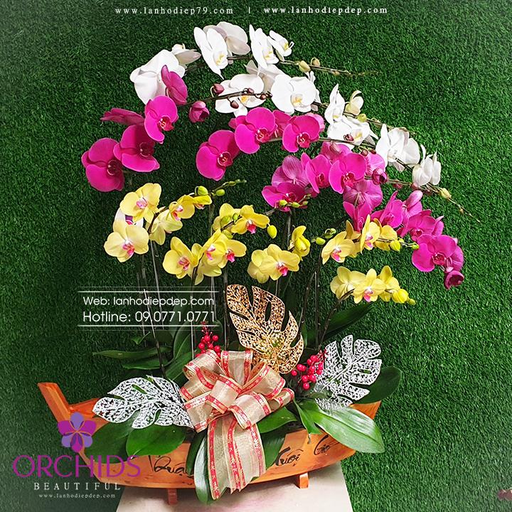Chậu lan hồ điệp 12cành hoa đasắc phối 3 màutrắng, tím và vàngthiết kế trên nền chậu thuyền gỗ thể hiệný nghĩa may mắn