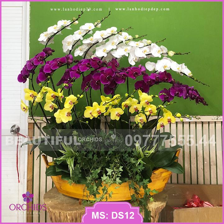 Thuyền hoa lan hồ điệp đa sắc 22 cành DS12