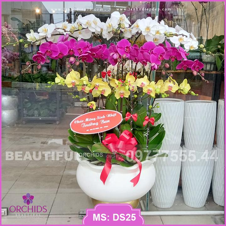 Chậu lan hồ điệp Đẹp 15 cành hoa đa sắc DS25