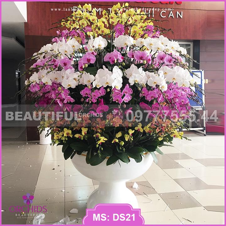 Chậu hoa lan Siêu To 190 cành hồ điệp DS21