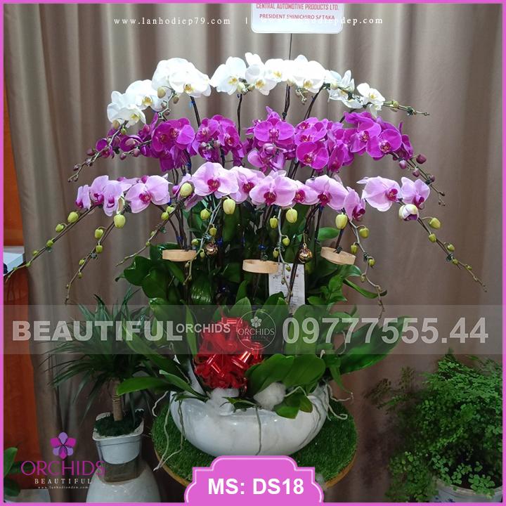 Chậu hoa lan đẹp 20 cành hồ điệp trắng tím hồng DS18