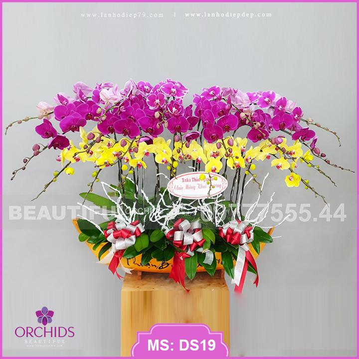 Thuyền hoa lan hồ điệp đẹp đa sắc màu 20 cành DS19