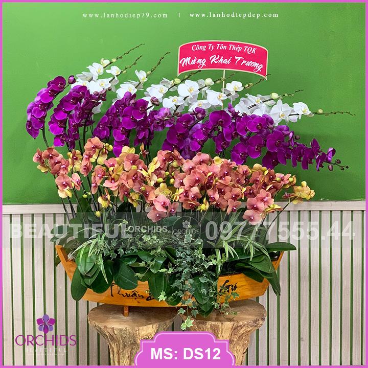 Thuyền hoa lan hồ điệp 36 cành tuyệt đẹp DS11