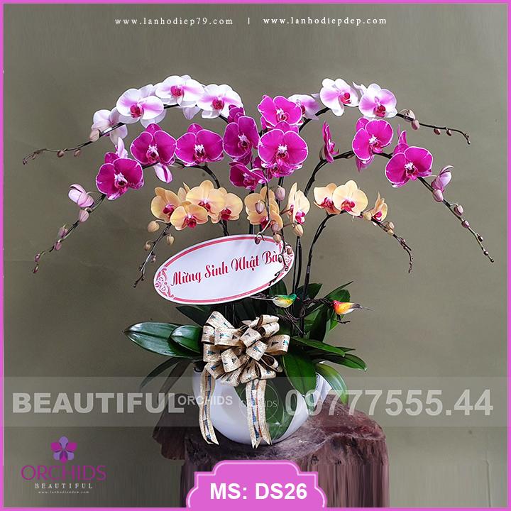 Chậu hoa lan Đẹp 8 cành hồ điệp nhiều màu DS26