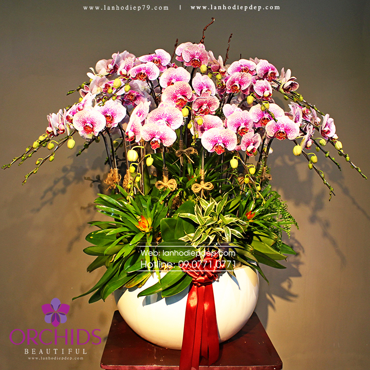 Chậu hoa lan hồ điệp đột biến 30 cành màu trắng đốm đỏ