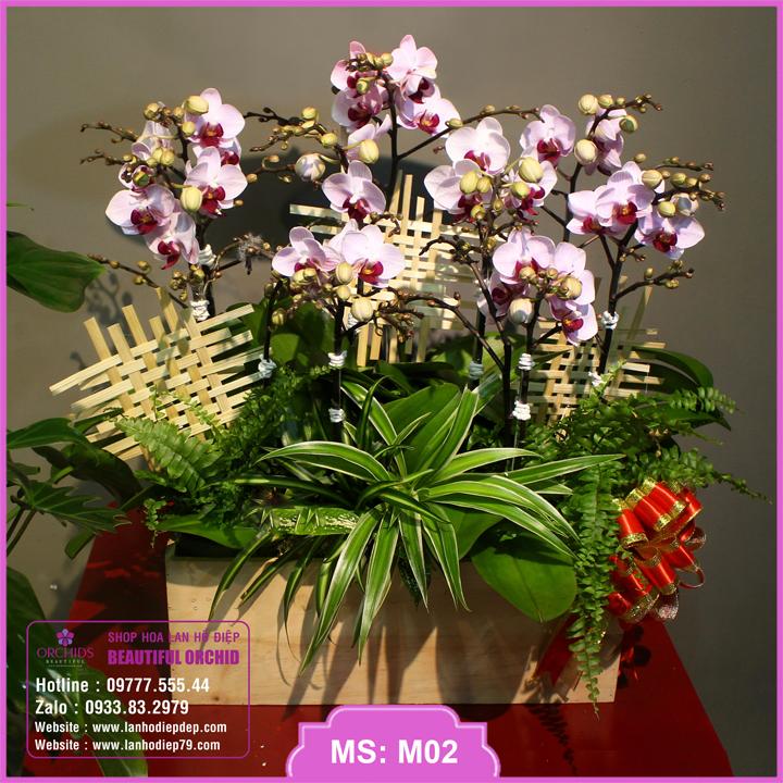 Chậu hoa lan hồ điệp mini 10 cành màu hồng M02