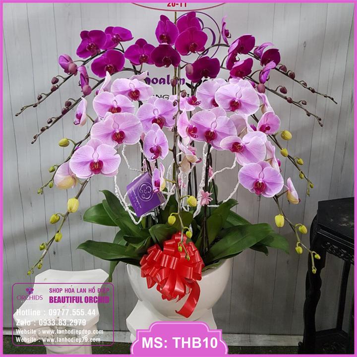 Chậu hoa lan hồ điệp tím hồng 10 cành THB10