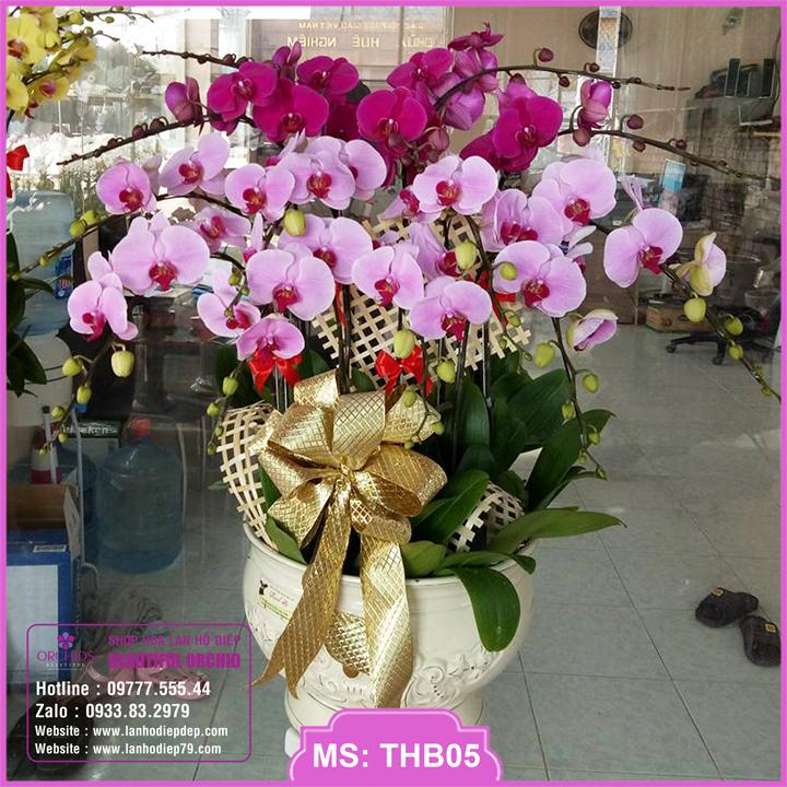 Chậu hoa lan hồ điệp tím hồng 12 cành THB05
