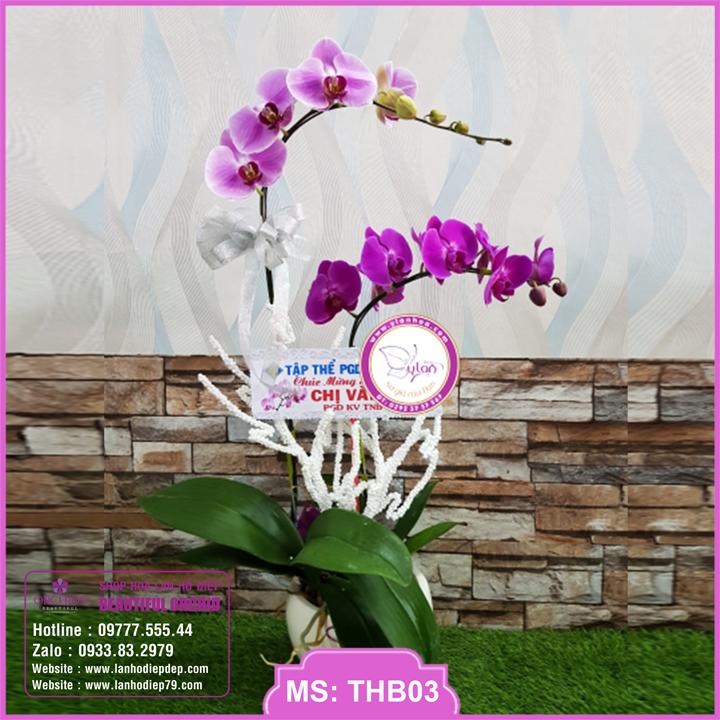 Chậu hoa lan hồ điệp tím hồng 2 cành THB03