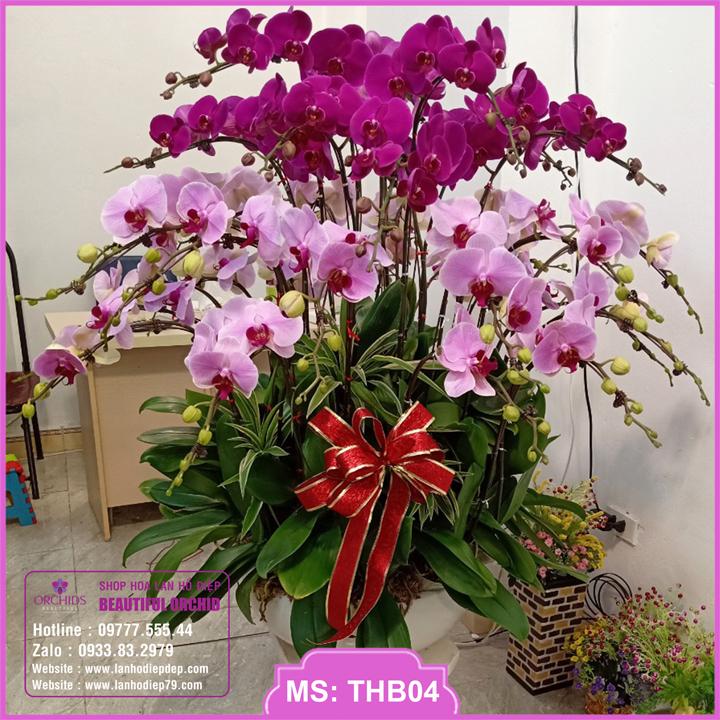 Chậu hoa lan hồ điệp tím hồng 35 cành THB04