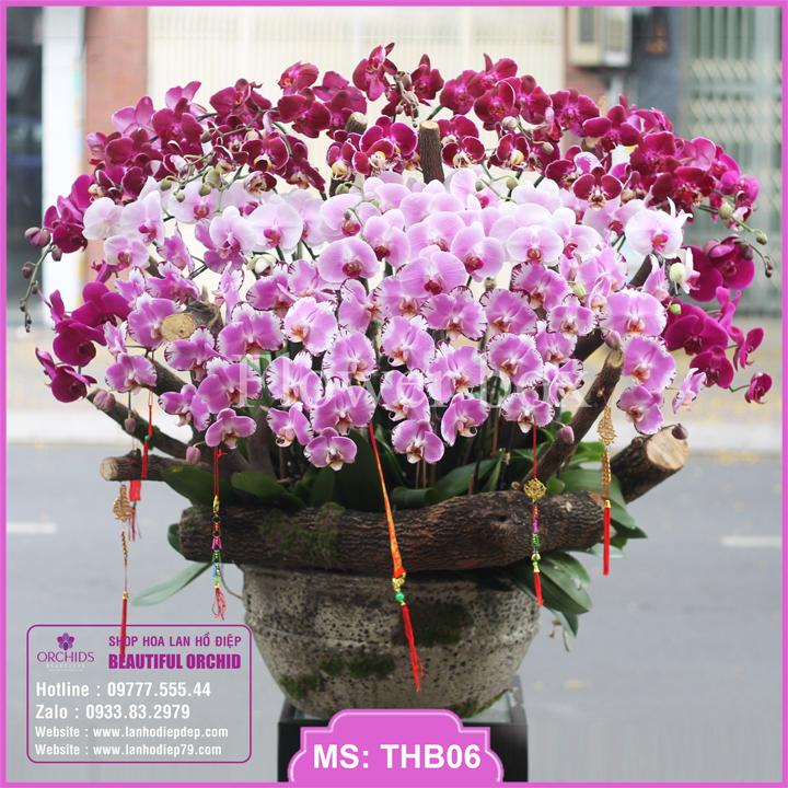 Chậu hoa lan hồ điệp tím hồng 39 cành THB06