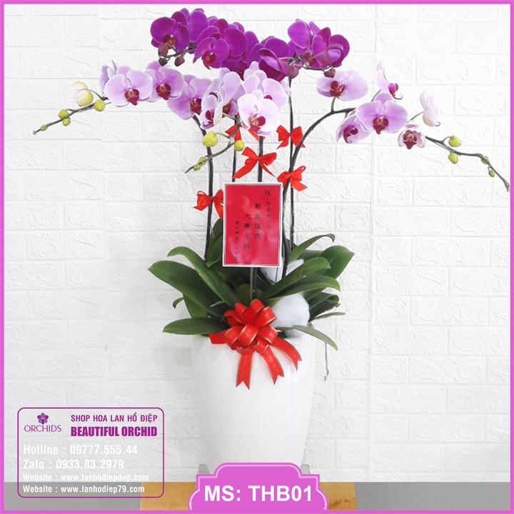 Chậu hoa lan hồ điệp tím hồng 5 cành THB01