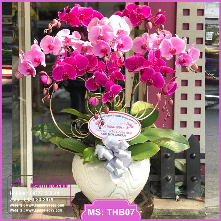 Chậu hoa lan hồ điệp tím hồng 8 cành THB07