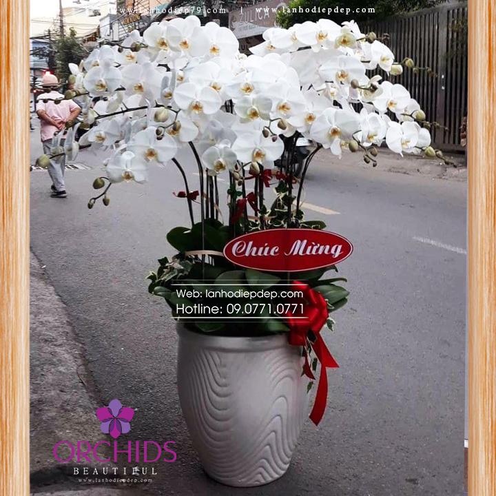 Chậu hoa lan hồ điệp trắng 15 cành TR03