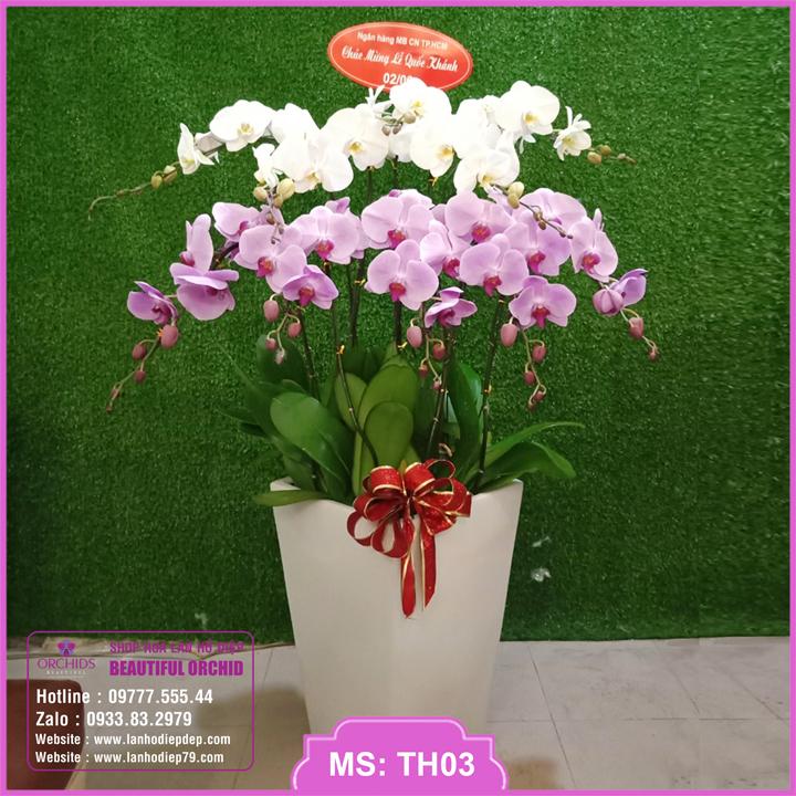 Chậu hoa lan hồ điệp trắng hồng 10 cành TH03