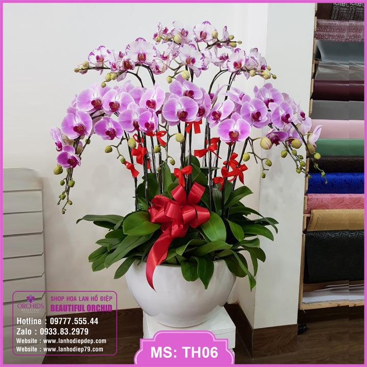 Chậu hoa lan hồ điệp trắng hồng 15 cành TH06