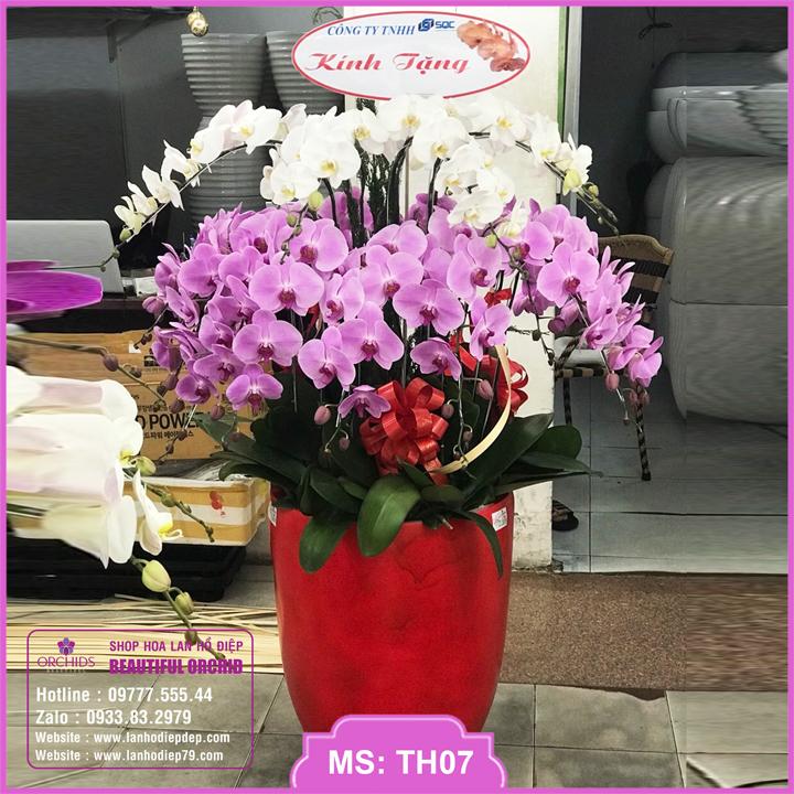 Chậu hoa lan hồ điệp trắng hồng 30 cành TH07