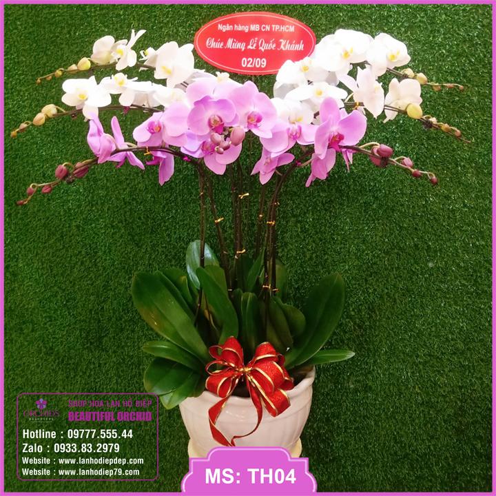 Chậu hoa lan hồ điệp trắng hồng 7 cành TH04