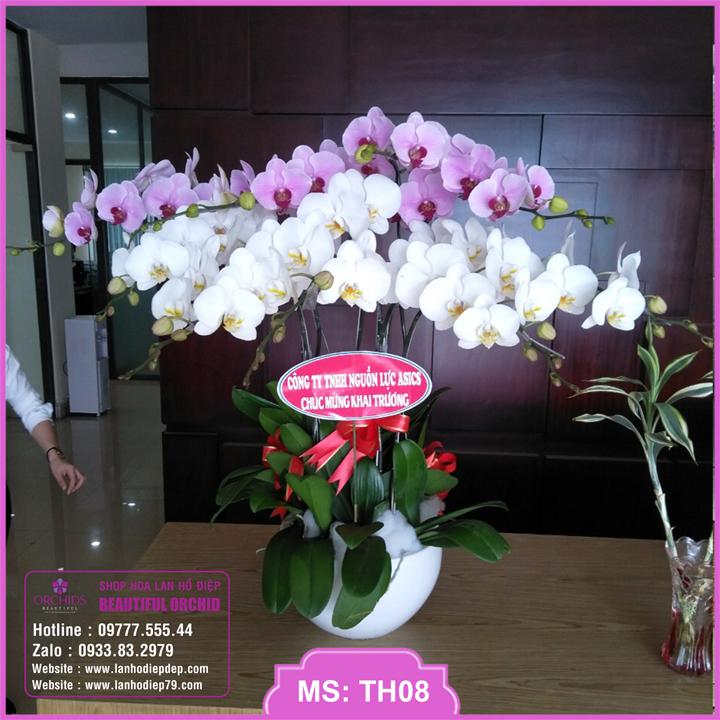 Chậu hoa lan hồ điệp trắng hồng 9 cành TH08