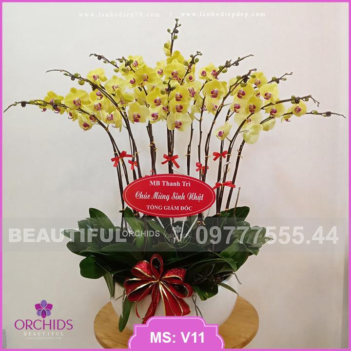 Chậu hoa lan hồ điệp màu vàng 15 cành V11