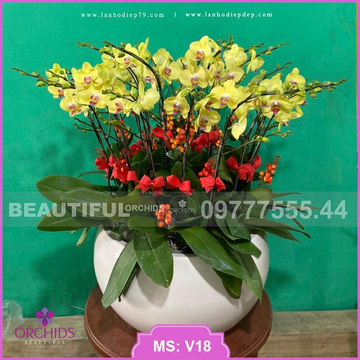 Bình hoa lan hồ điệp vàng 15 cành V18