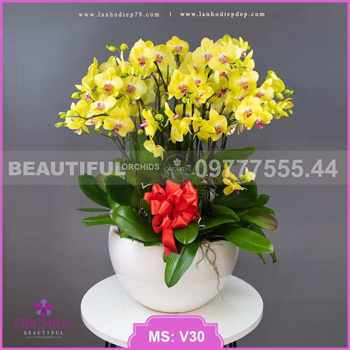 Chậu hoa lan đẹp màu vàng