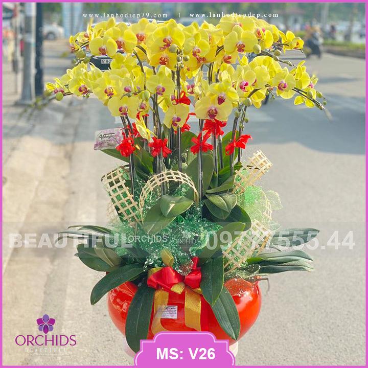 Chậu hoa lan hồ điệp 19 cành lan Vàng V26