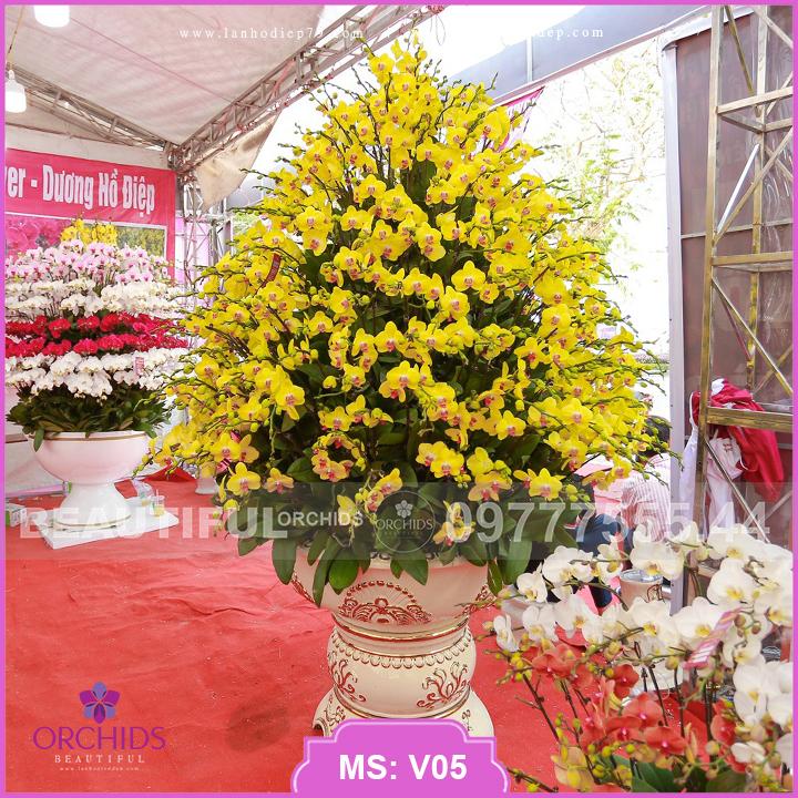 Chậu hoa lan hồ điệp vàng 200 cành V05