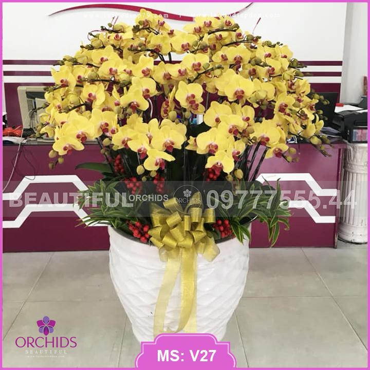Bình hoa lan vàng Đẹp 40 cành lan hồ điệp V27