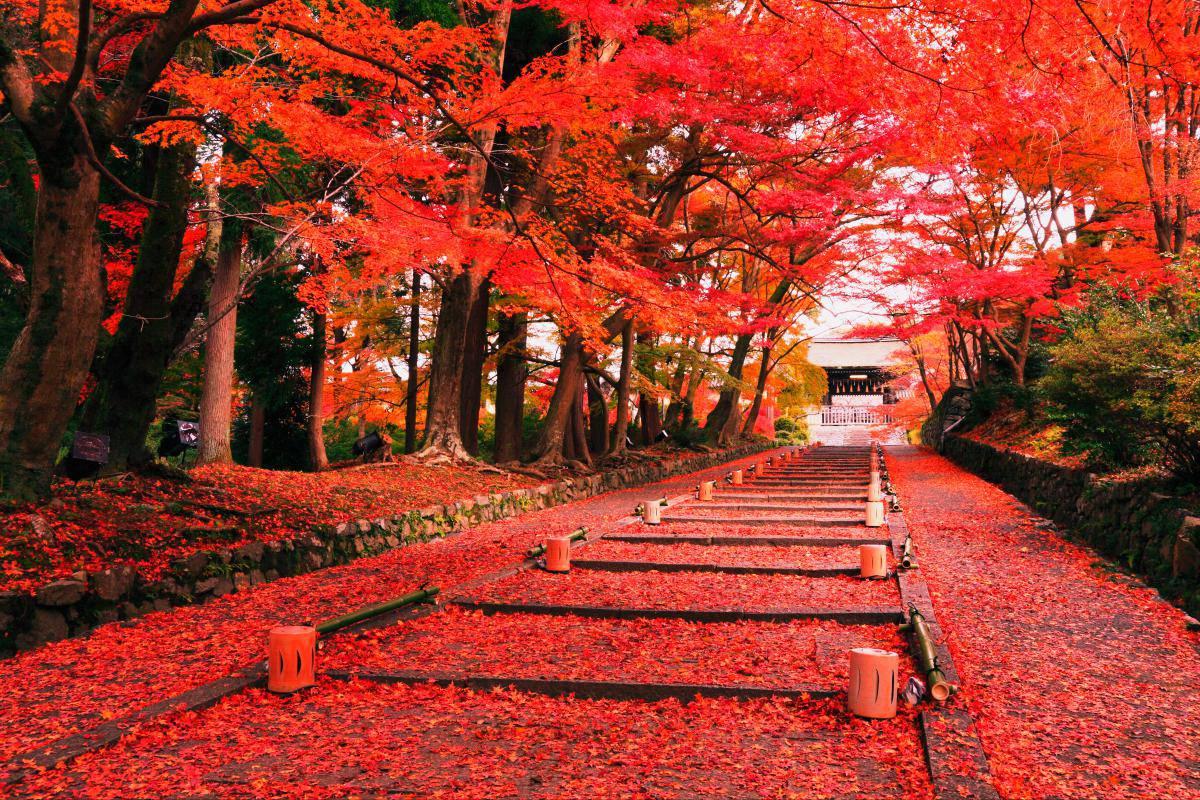 Dự báo ngày lá đỏ đẹp nhất ở các khu vực tại Nhật 2017