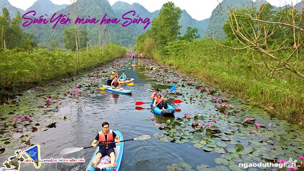 Hoa Súng suối Yến chùa Hương