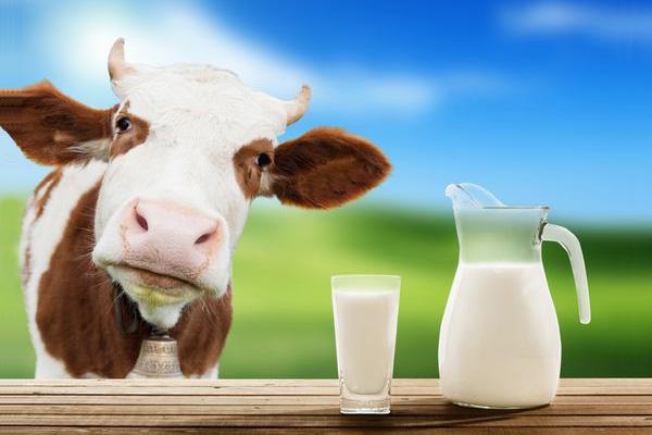 Kết quả hình ảnh cho sữa bò