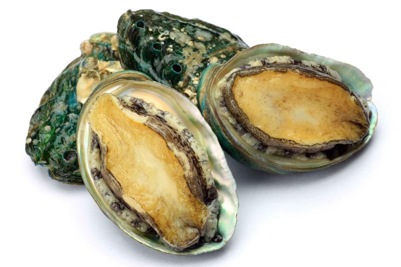 phu-quoc-abalone.jpg?v=1483006760139