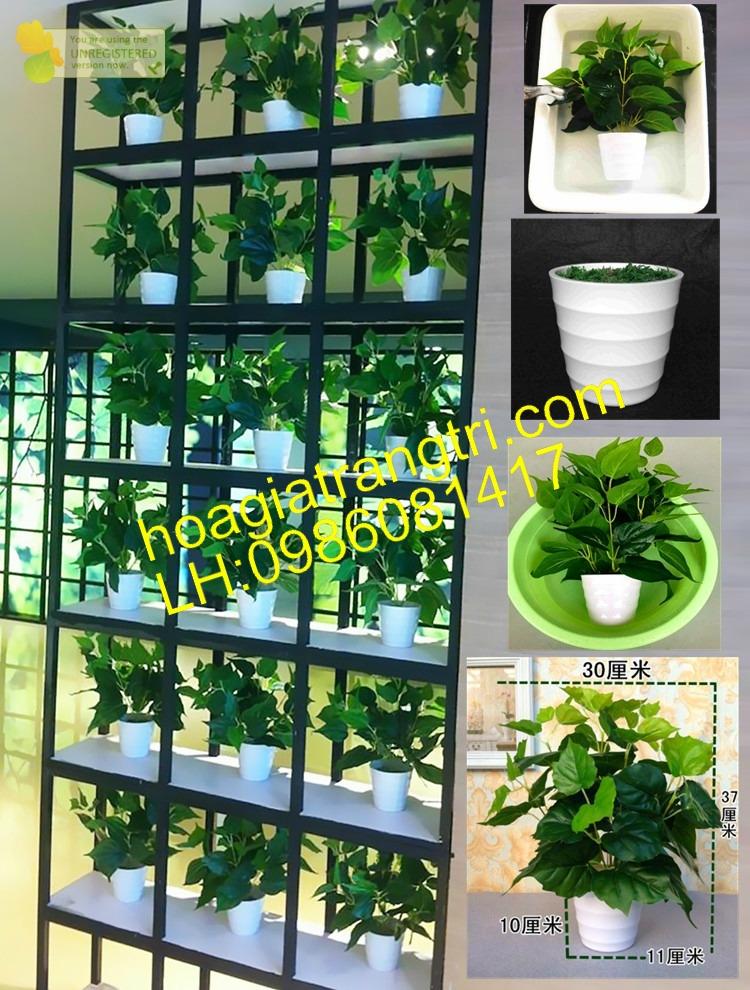 Bán cây giả Vạn Niên Thanh đốm tại Hoa lụa Phương Thảo