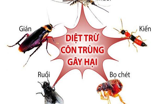 Tuyệt chiêu diệt côn trùng vô cùng hiệu quả