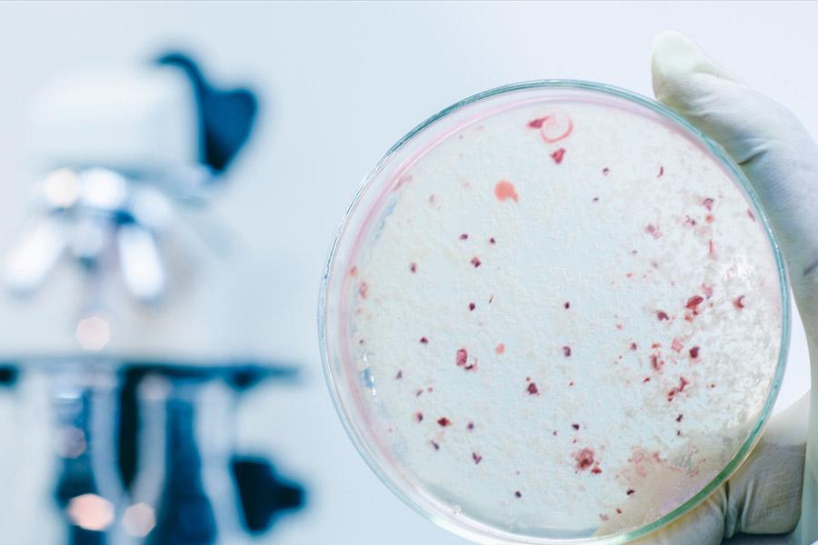 Phòng thí nghiệm vi sinh