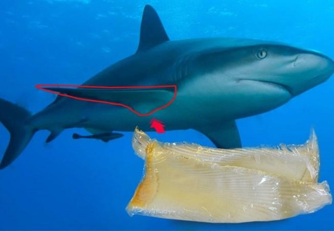 Nơi bán thuốc sụn vi cá mập an toàn uy tín
