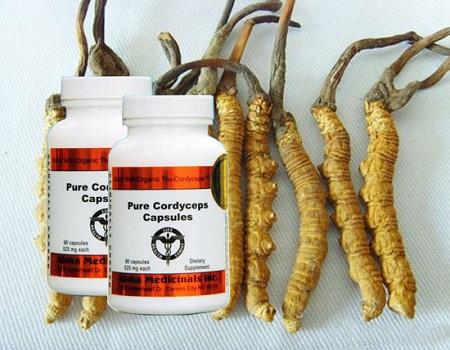 Đông trùng hạ thảo cordyceps 950