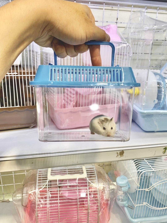Hộp xách tay mica cho hamster